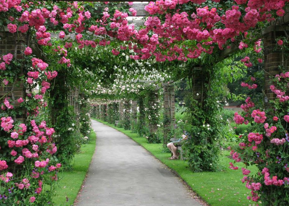 海南三亚亚龙湾国际玫瑰谷